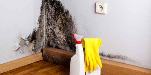 Mold: A Nightmare a Landlord Must Not Hide From